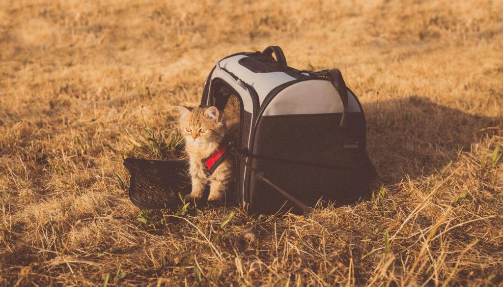 Comment voyager avec un chat