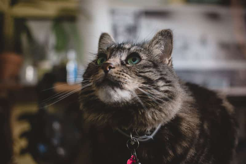 assurance santé pour mon chat