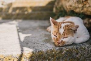 chat qui tousse