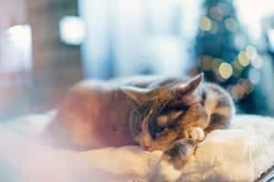 comment enlever odeur urine chat