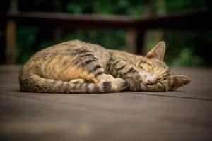 chat problème de santé