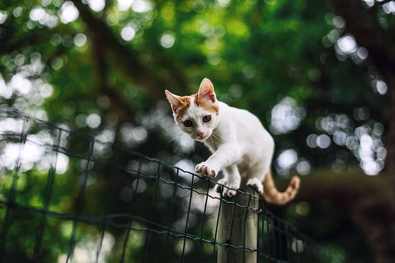 Répulsif chat naturel : comment éloigner les chats de votre maison ?