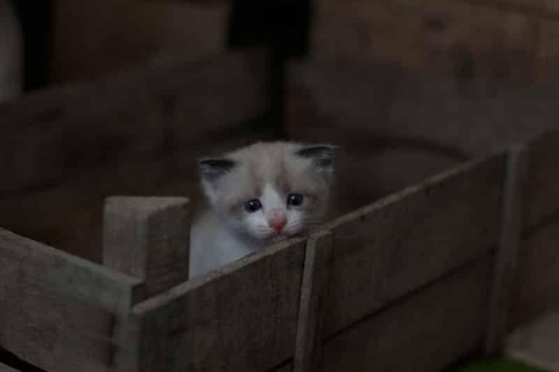 chat qui pleure