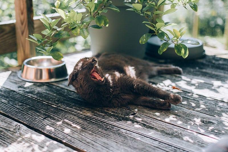 mon chat ne mange plus dans sa gamelle