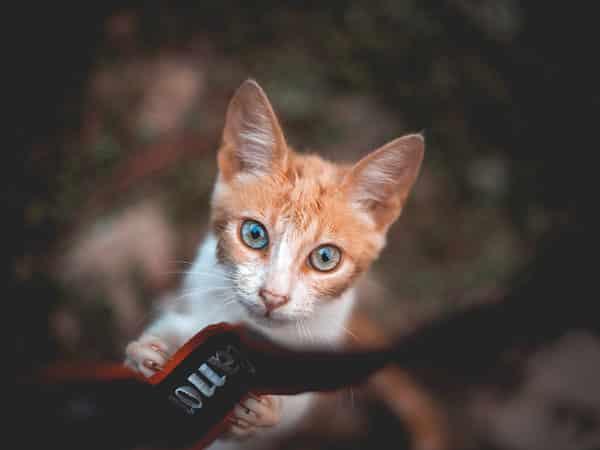 caméra pour chat