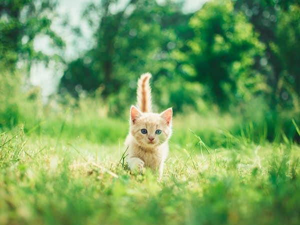 croquettes chaton