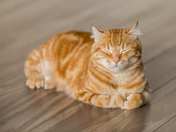 croquettes chat stérilisé
