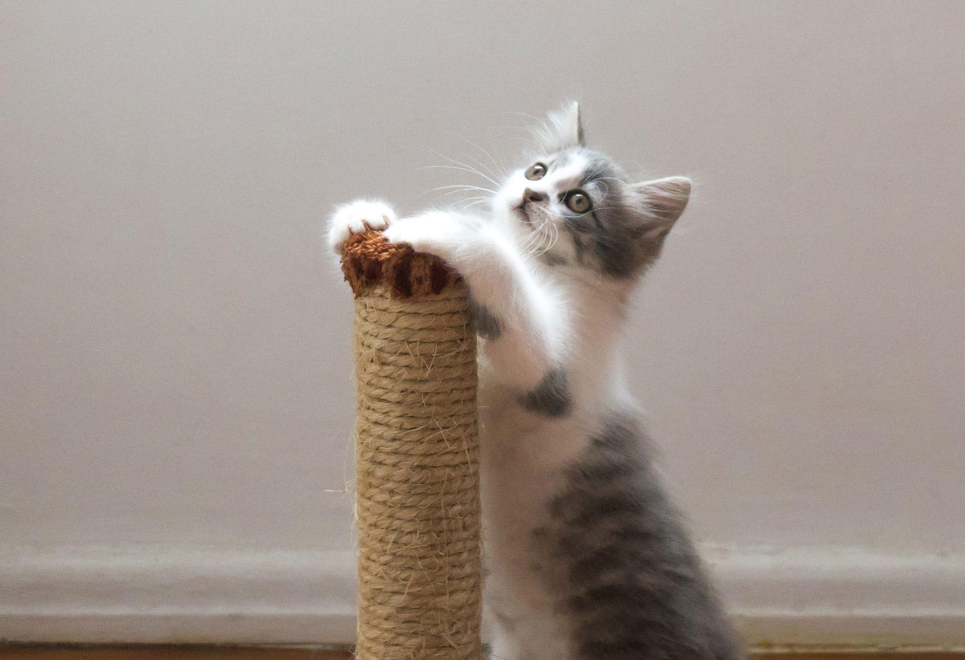 Griffoir Chat Carton Design griffoir chat - découvrez les meilleurs griffoirs pour chat !