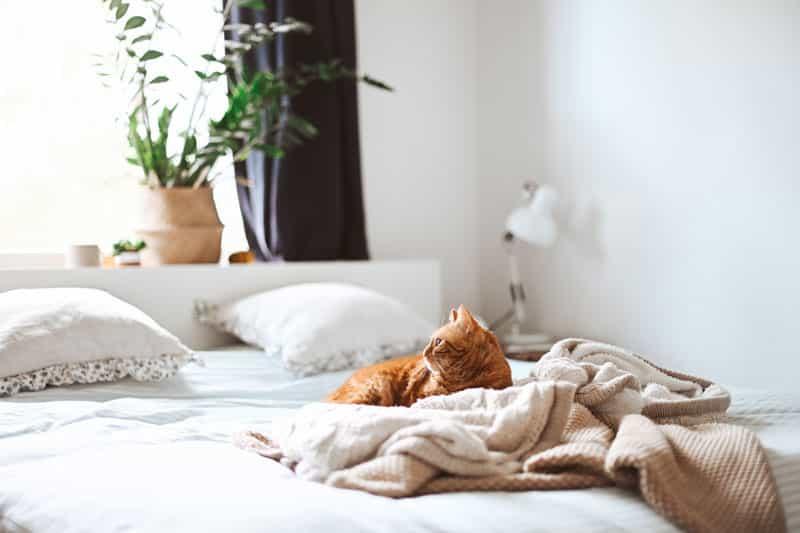 hôtel pour chat