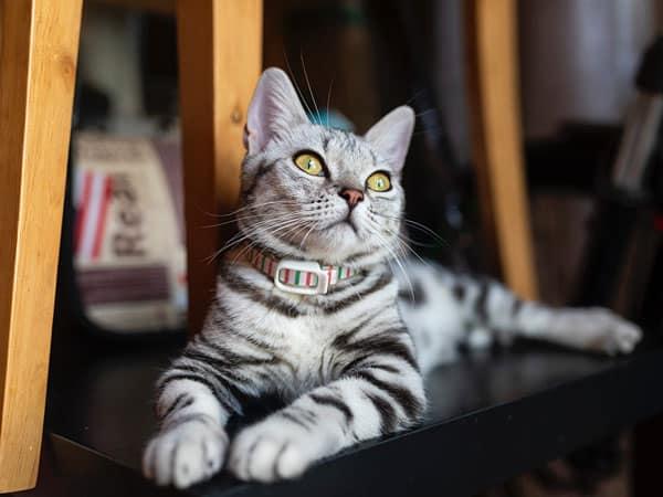 accessoire mignon pour chat