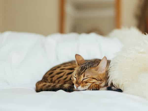 panier / niche pour chat