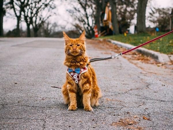 accessoire de transport pour chat