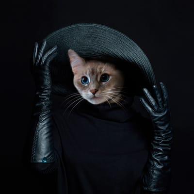 Yuki - Le Monde des Chats