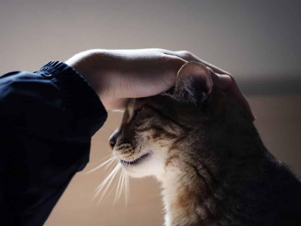comportementaliste pour chat