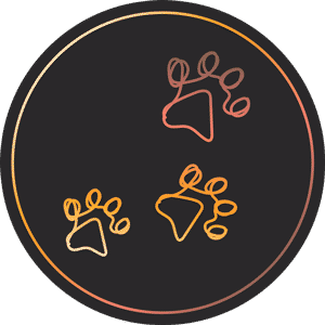 mon-chat-au-quotidien-juste-apres-adoption-icone-300px