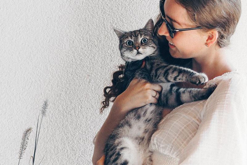 Êtes-vous fan de chats ? Vous êtes peut-être ailurophile !