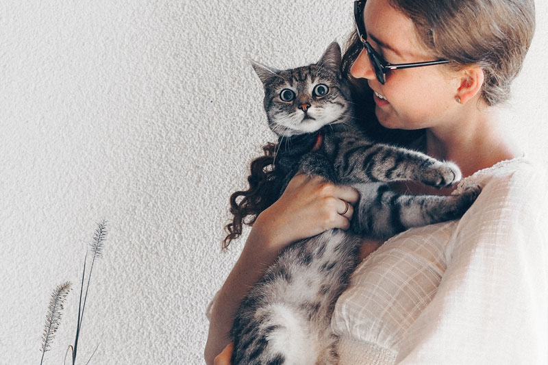 ailurophile fan de chats